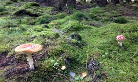 Herbstwanderung im Vogelsberg
