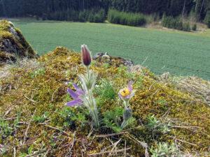 Flora - Das Leben erwacht