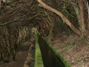 Baumheide als Tunneldach