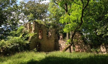 Premiumwanderweg P16 Asbach – Sickenberg