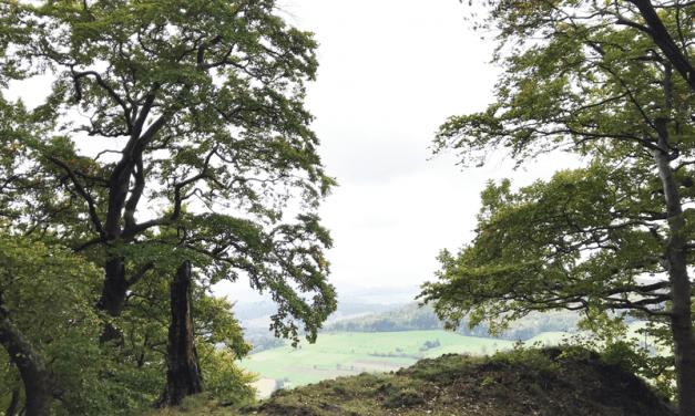 Habelsberg ( Tann )